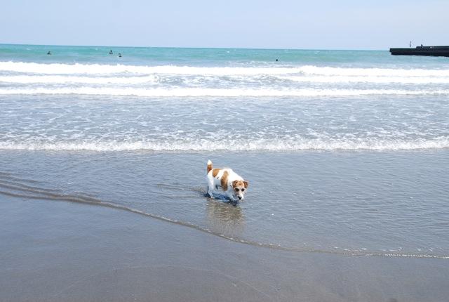 愛犬と旅行(6月のこと)_c0099133_16532640.jpg