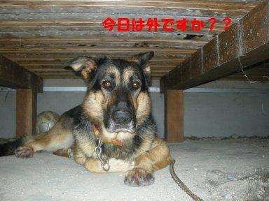 b0113663_9121145.jpg