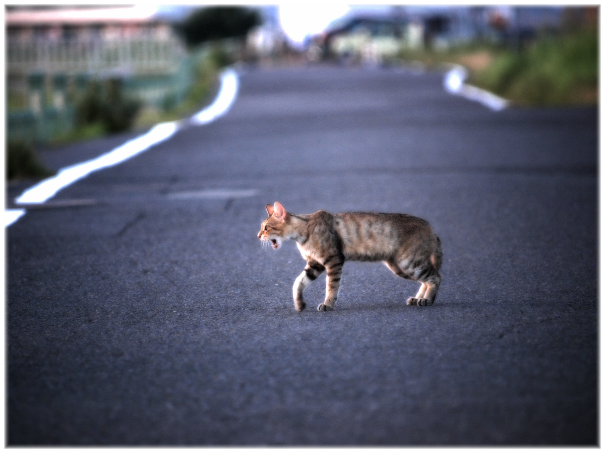 猫にゃん 1_f0021869_22384560.jpg