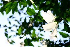 風街ろまん いい匂い 98 「走れマッチョメロス龍馬ぁ!」_c0121570_16225710.jpg