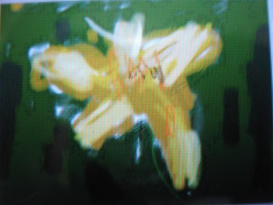 f0177670_12492610.jpg