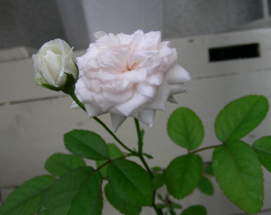 b0096584_8304261.jpg