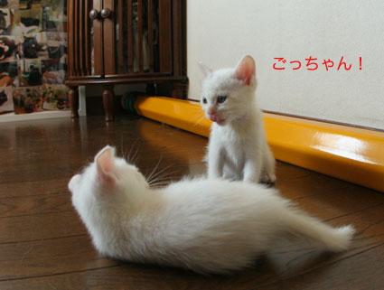 夏っチャンの…初チュー!_d0071596_22111970.jpg