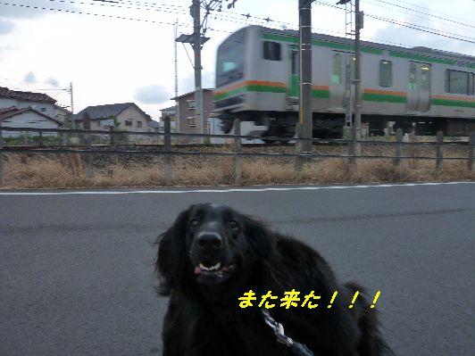 c0097309_8115061.jpg