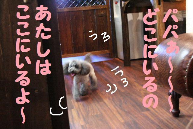 b0130018_914668.jpg