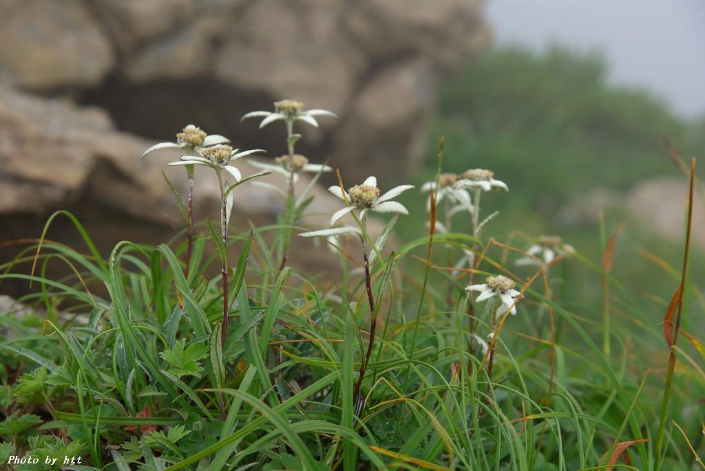 早池峰山の画像 p1_31