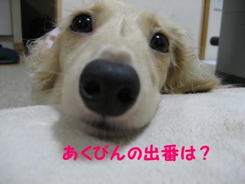 b0160052_859539.jpg