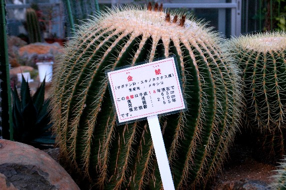 和歌山県植物公園緑花センター _b0093754_012656.jpg