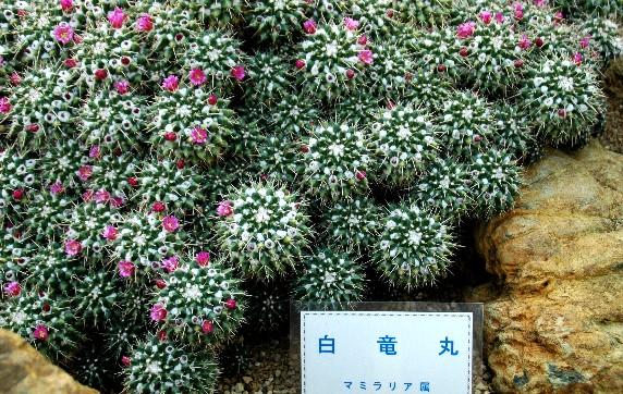 和歌山県植物公園緑花センター _b0093754_23474234.jpg