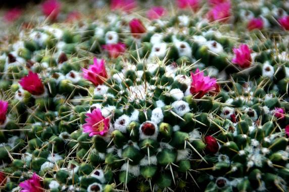 和歌山県植物公園緑花センター _b0093754_23474822.jpg