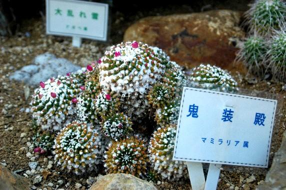 和歌山県植物公園緑花センター _b0093754_23475544.jpg