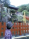 鶴岡八幡宮の大銀杏_b0096957_936590.jpg