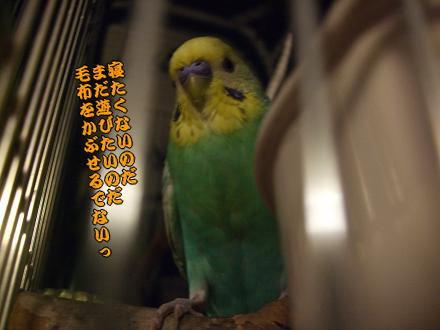 f0149057_0432653.jpg