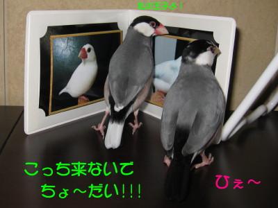 b0158061_21401640.jpg