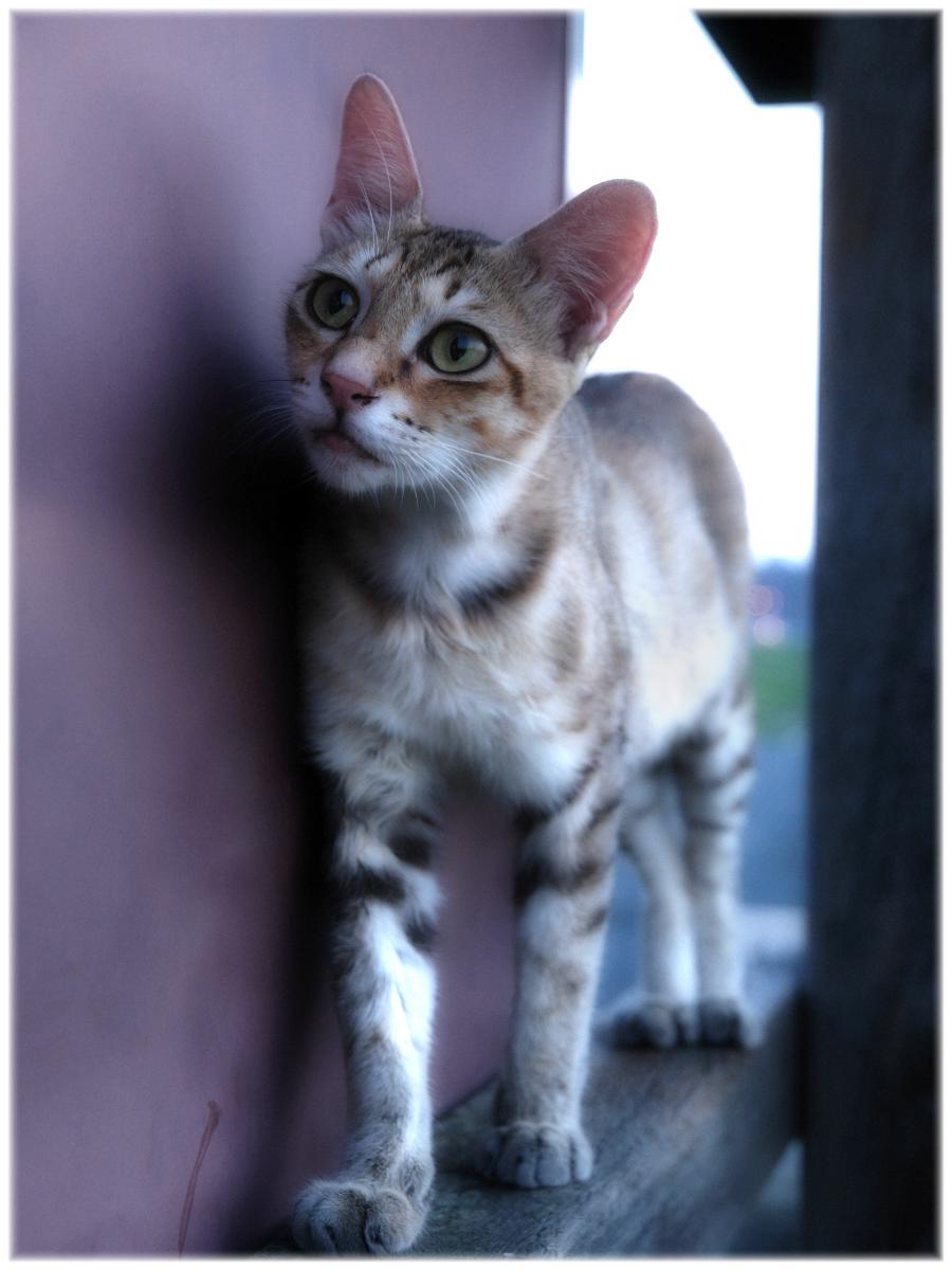 猫にゃん 2_f0021869_23243962.jpg