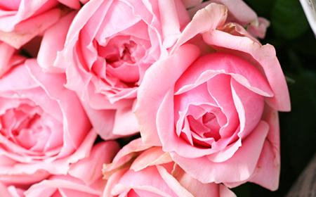 ROSE♡_d0158980_17425446.jpg