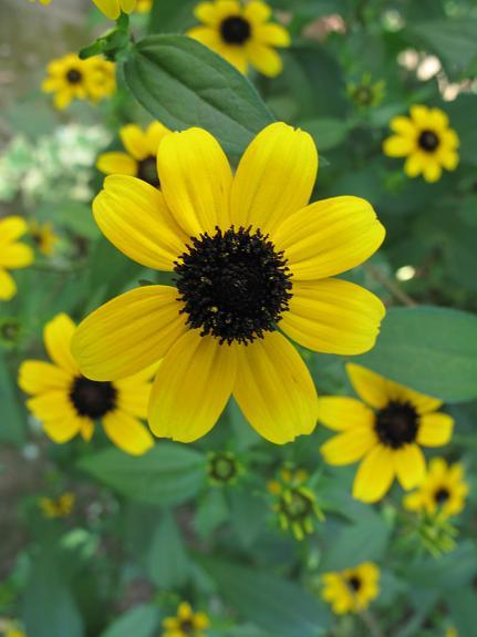 庭の花_d0150720_10171452.jpg