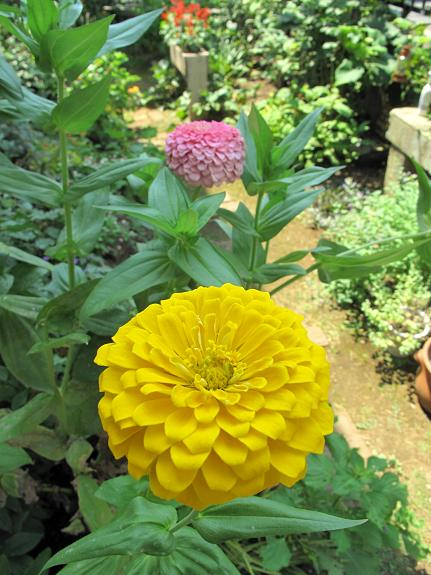庭の花_d0150720_10182382.jpg