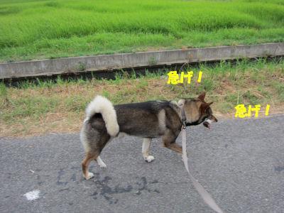 f0143123_2083529.jpg