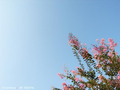 Midsummer_c0092152_058886.jpg