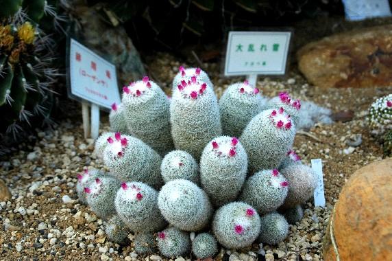 和歌山県植物公園緑花センター _b0093754_2350250.jpg