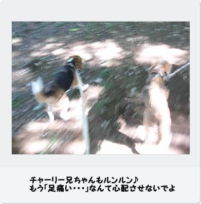 b0098660_23525016.jpg