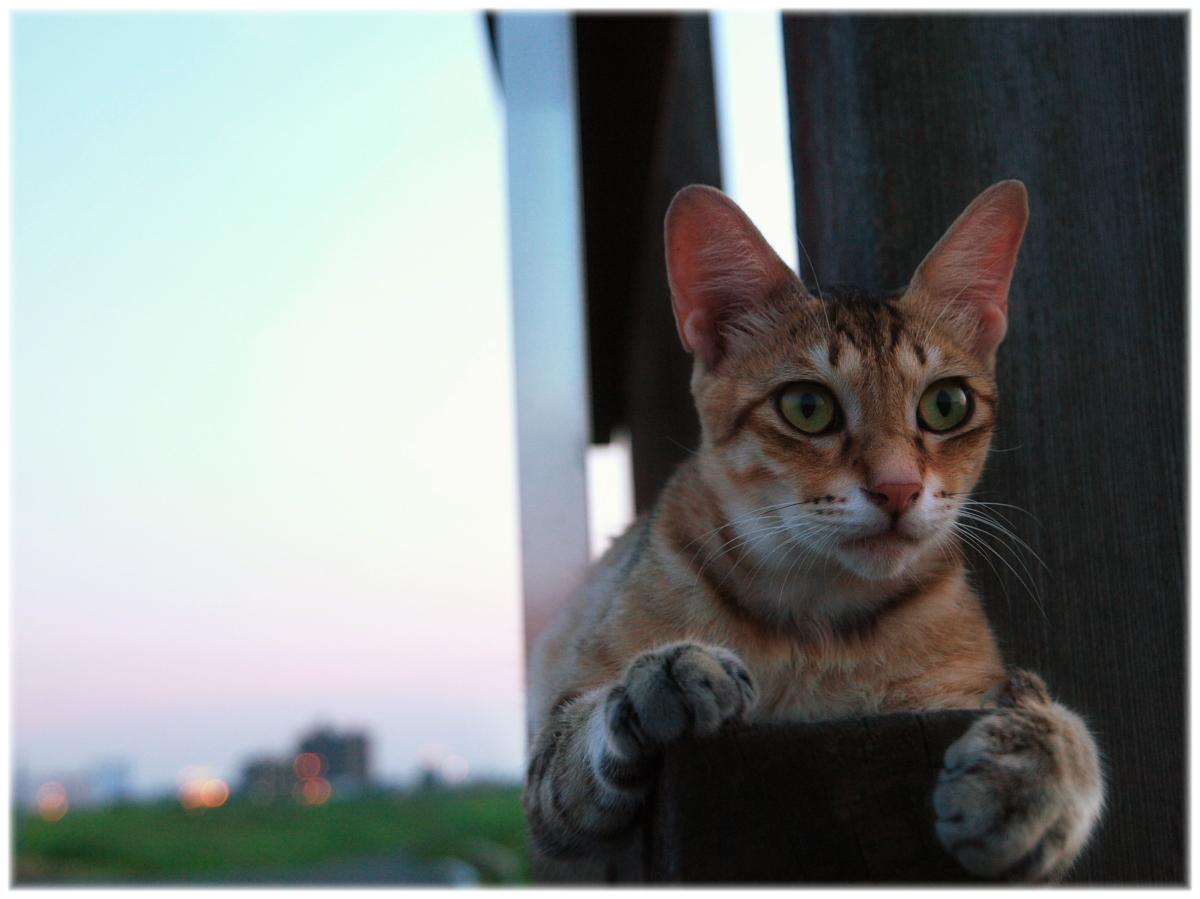 猫にゃん 3_f0021869_23332027.jpg