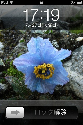 A noble blue poppy from Nepal_e0014773_11332214.jpg