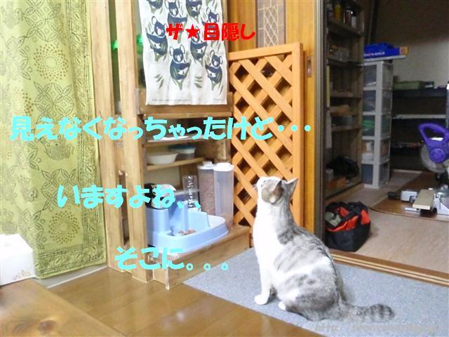 a0159490_11332160.jpg