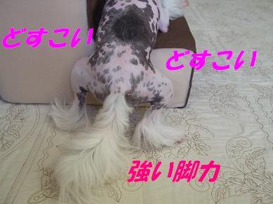 f0179203_6252112.jpg