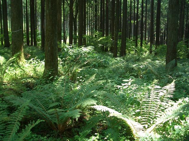 富士ひのきの森林認証林で「木こりツアー」_f0141310_4592265.jpg
