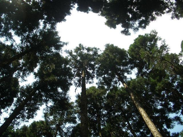 富士ひのきの森林認証林で「木こりツアー」_f0141310_4595037.jpg