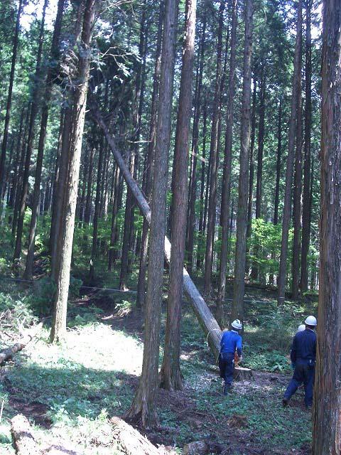 富士ひのきの森林認証林で「木こりツアー」_f0141310_511968.jpg