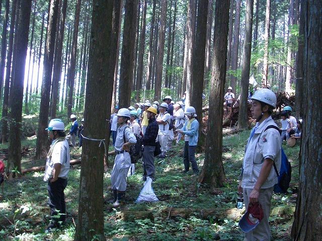 富士ひのきの森林認証林で「木こりツアー」_f0141310_512950.jpg