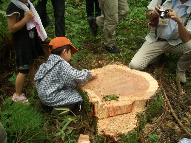 富士ひのきの森林認証林で「木こりツアー」_f0141310_515228.jpg