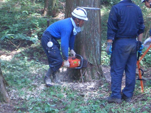 富士ひのきの森林認証林で「木こりツアー」_f0141310_51933.jpg