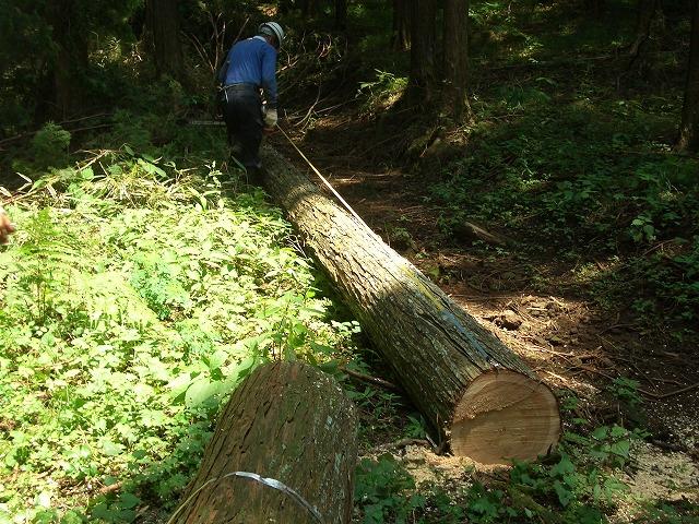 富士ひのきの森林認証林で「木こりツアー」_f0141310_522398.jpg