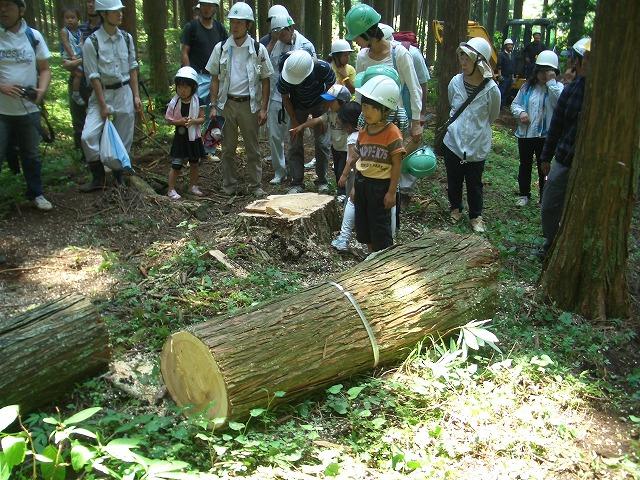 富士ひのきの森林認証林で「木こりツアー」_f0141310_53958.jpg