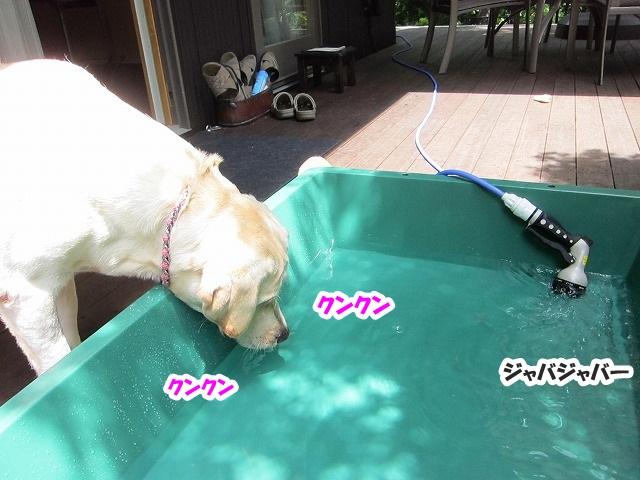 水遊び?_e0192217_835268.jpg