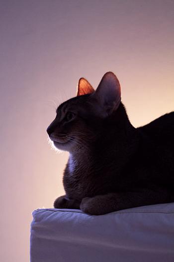 [猫的]Untitled series_e0090124_7405910.jpg