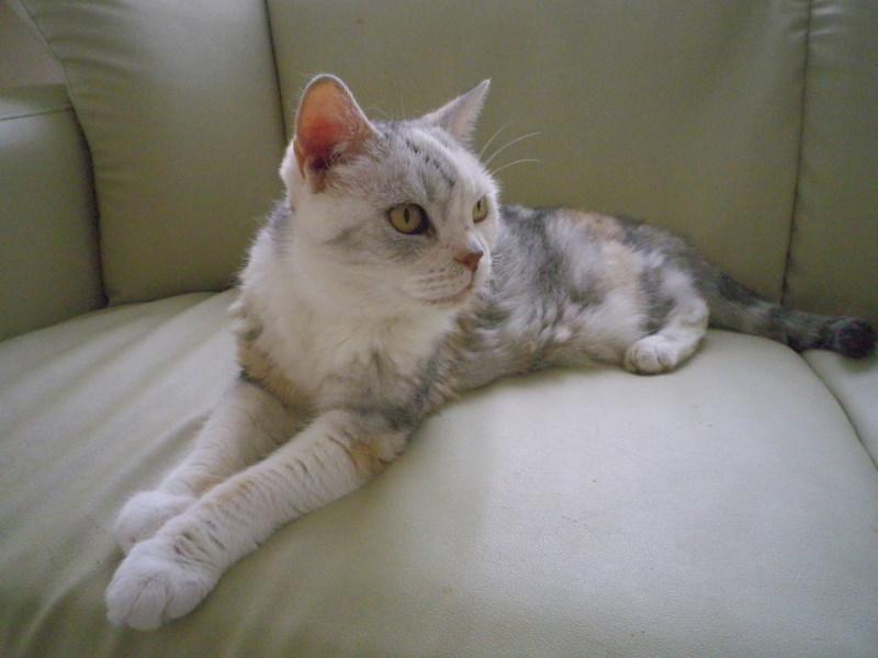 猫紹介その③_f0234628_10532724.jpg