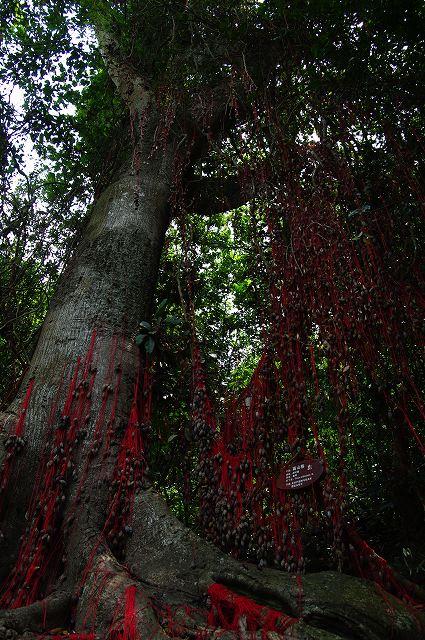 中国・海南島旅行10  檳榔谷(少数民族村)_b0112443_21182751.jpg