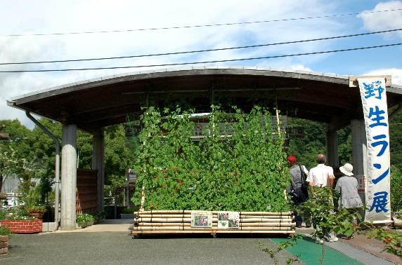 和歌山県植物公園緑花センター _b0093754_23554193.jpg