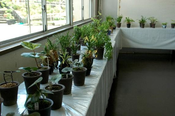 和歌山県植物公園緑花センター _b0093754_23564100.jpg