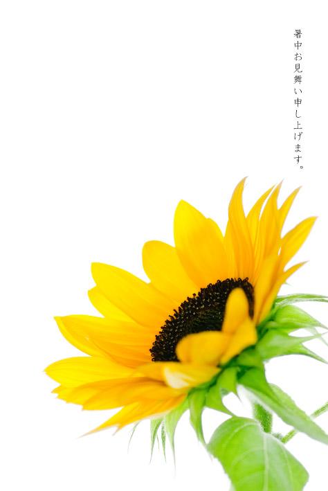 d0111087_5393736.jpg