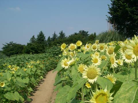 記念公園通信_b0172896_11313727.jpg