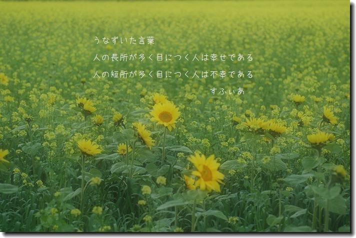 b0152416_13225911.jpg