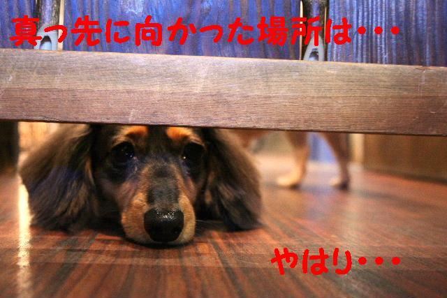 写真少ないじゃん!!_b0130018_13351642.jpg