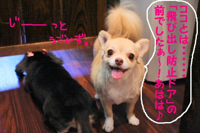 写真少ないじゃん!!_b0130018_13352640.jpg