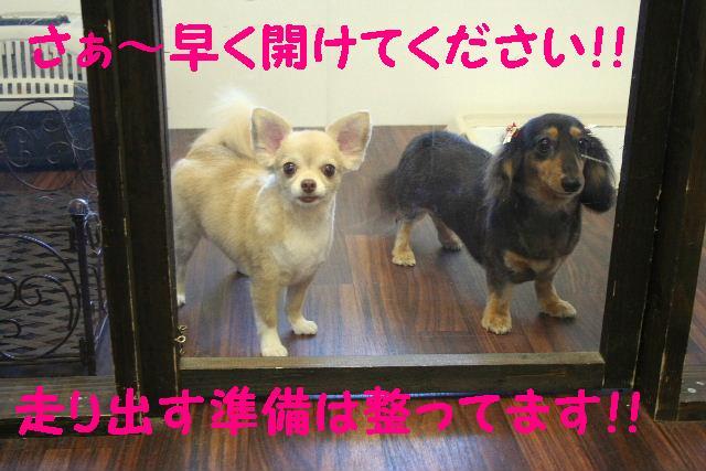 写真少ないじゃん!!_b0130018_1335984.jpg
